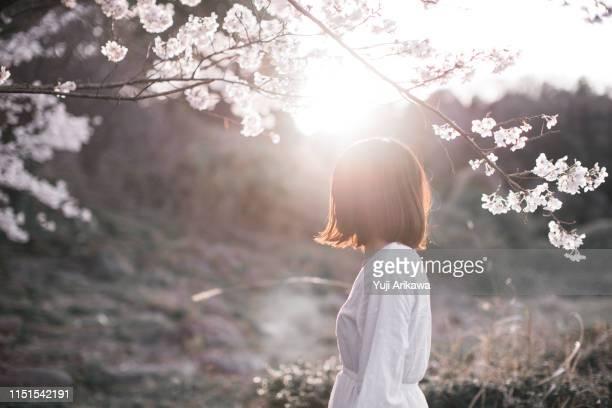 a woman under the cherry blossoms - onherkenbaar persoon stockfoto's en -beelden