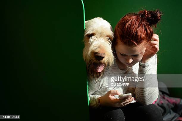 A woman uses a mobile phone next to an Italian Spinone dog on the second day of the Crufts dog show at the National Exhibition Centre in Birmingham...