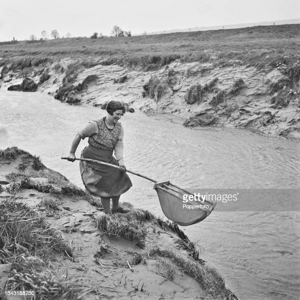 Woman uses a traditional wooden willow net to catch eels and elvers in a waterway on the Somerset Levels in Somerset, England on 1st April 1942.