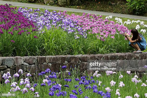Woman uses her smart phone to take a picture of the Iris blossom field at the Banshu Yamasaki Hanashobu Park on June 13, 2016 in Shiso, Hyogo...