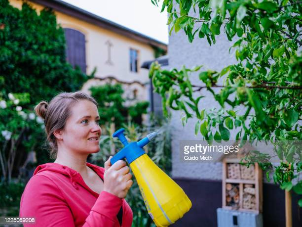 woman using environmentally friendly biocide of nettle plant. - aphid stock pictures, royalty-free photos & images