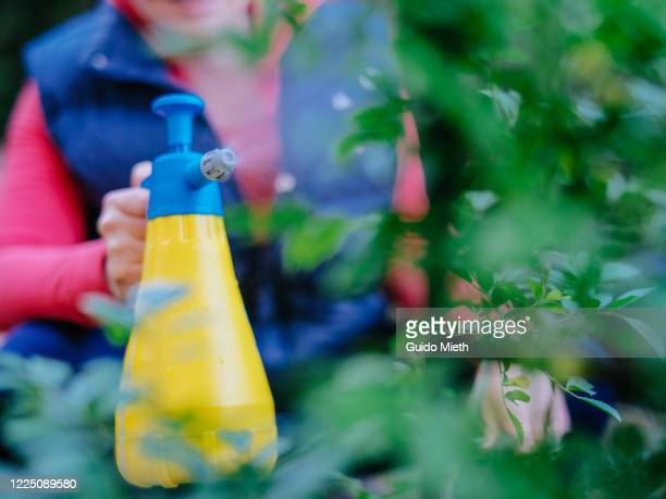 woman using environmentally friendly biocide of nettle plant. - guido mieth stock pictures, royalty-free photos & images