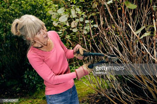 woman using garden loppers on rhododendron bush - cutting stock pictures, royalty-free photos & images