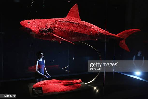 A woman views a plastinated shark showing the structure of the blood vessels in the 'Animal Inside Out' exhibition at the Natural History Museum on...