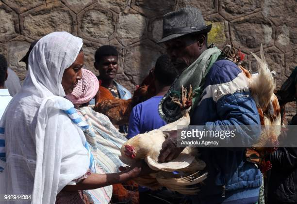 A woman views a rooster at the Sholla bazaar ahead of Easter celebrations in Addis Ababa Ethiopia on April 07 2018 Orthodox Christians fast for 55...