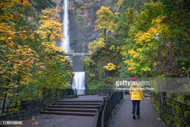 woman visiting multnomah falls in autumn. cascade locks, multnomah county, oregon, us. - multnomah falls stock pictures, royalty-free photos & images