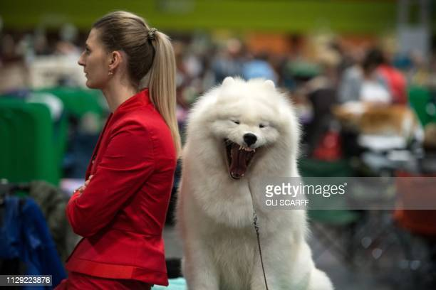 Woman waits with her samoyed dog by its pen on the second day of the Crufts dog show at the National Exhibition Centre in Birmingham, central...