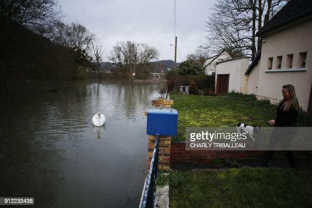 A woman walkes her dog on a raised lawn as a swan swims past on a flooded bank of the River Seine in the French northwestern city of Elbeuf on...