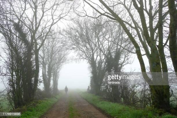 woman walking along a treelined road in the mist, deux-sevres, niort, france - deux sevres fotografías e imágenes de stock