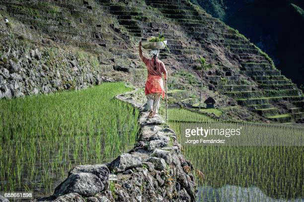 Woman walking along rice terraces