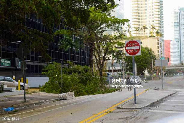 woman walking dog after the hurricane - miami dade county stock photos and pictures