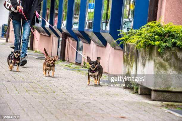 Frau zu Fuß Hunde ulica Montreux, Schweiz