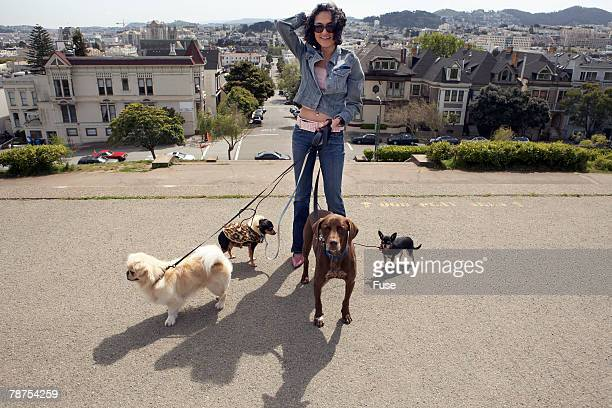 woman walking dogs - dog walker stock photos and pictures