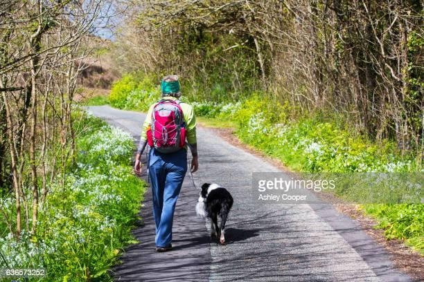 a woman walking down a lane fringed by wild garlic in st just, cornwall, uk. - ashley lane stock-fotos und bilder