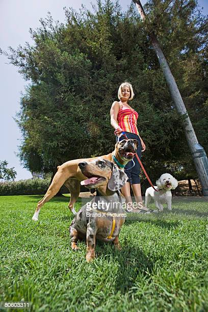 woman walking great dane, dachshund and poodle - dog walker stock photos and pictures