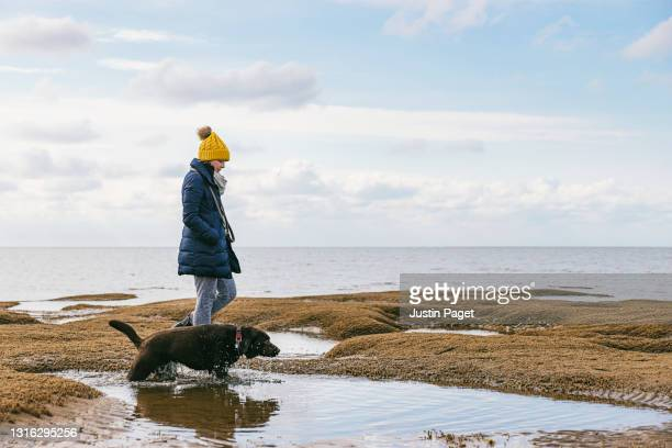 woman walking her dog along the beach - norfolk england stock pictures, royalty-free photos & images