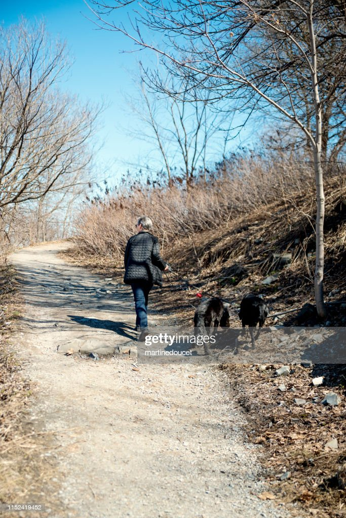 60+ woman walking her dogs in city park. : Stock Photo