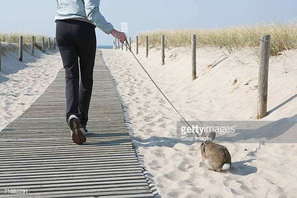 a woman walking her pet rabbit at the beach - rabbit beach stock photos and pictures