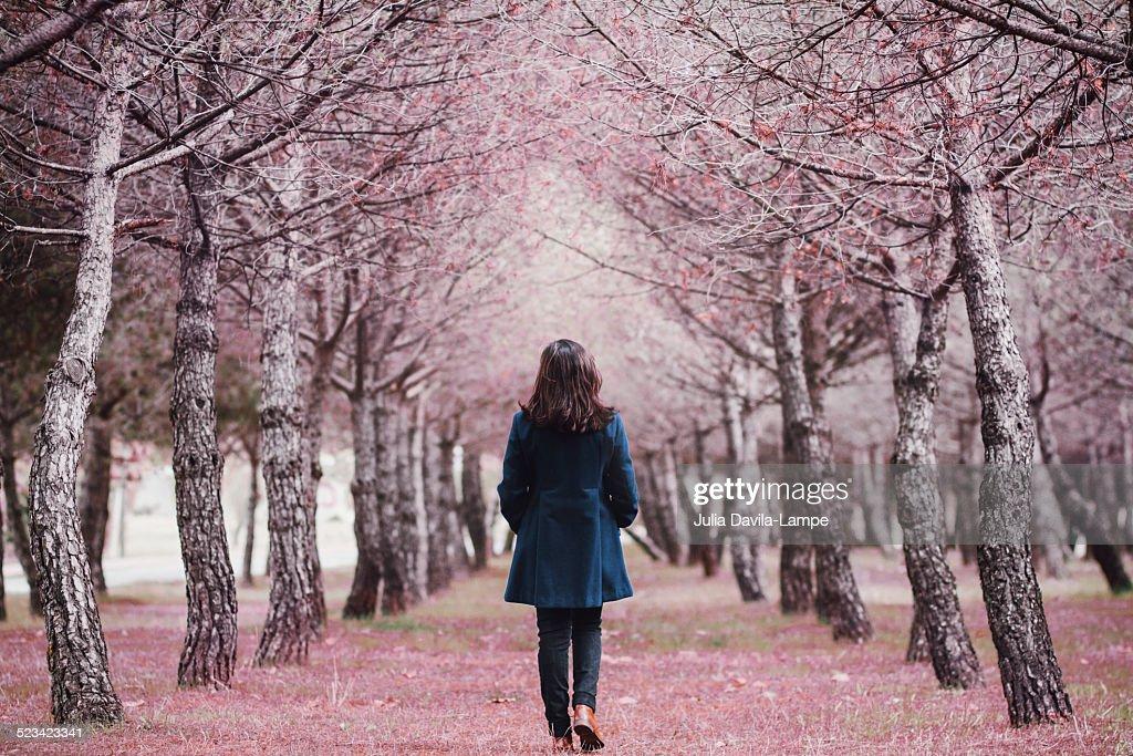 Woman walking in a pine tree alley : Stock Photo