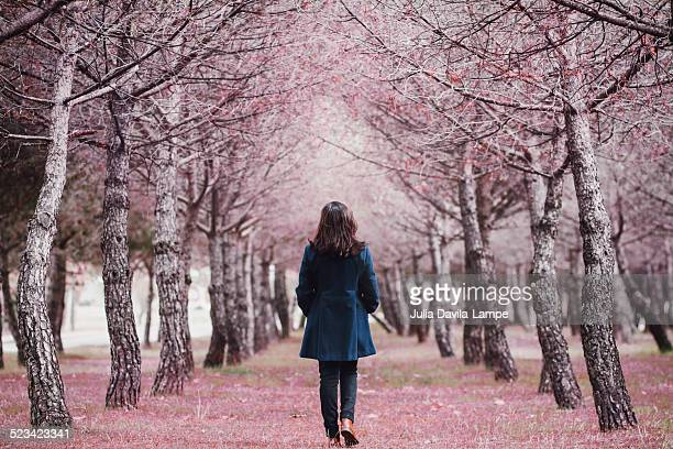 woman walking in a pine tree alley - julia rose stock photos and pictures