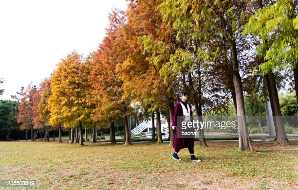 woman walking in autumn park - bald cypress tree stock pictures, royalty-free photos & images