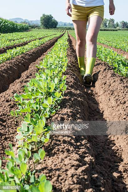 Woman walking in field with young peanut plants