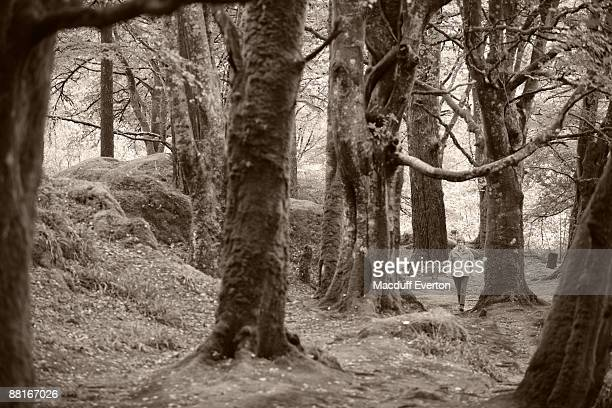 woman walking in forest , glen coe , scotland - everton women stock pictures, royalty-free photos & images