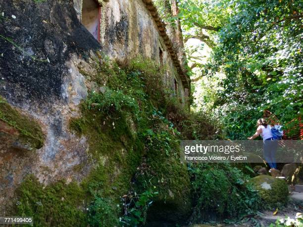 woman walking in forest - sintra stock pictures, royalty-free photos & images