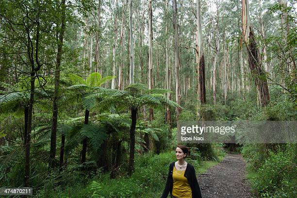 woman walking in rainforest, australia - dandenong stock photos and pictures