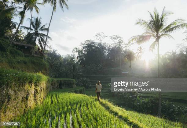 woman walking in rice terrace, tegallalang, bali, indonesia - tegallalang stock photos and pictures