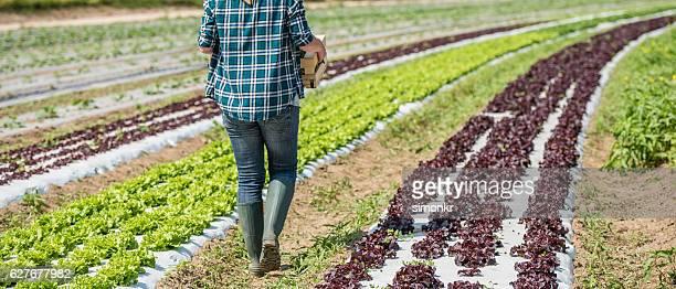 Woman walking in vegetable garden