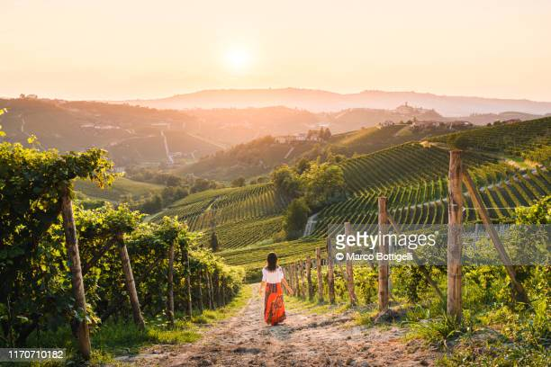 woman walking in vineyards enjoying the sunset, langhe region, piedmont, italy. unesco site - vivere semplicemente foto e immagini stock