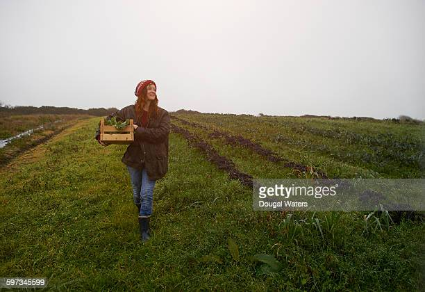Woman walking on farmland with box of fresh kale.