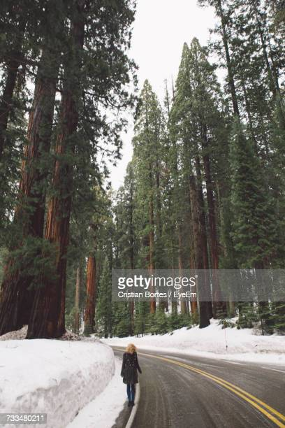woman walking on road amidst trees during winter - bortes stockfoto's en -beelden