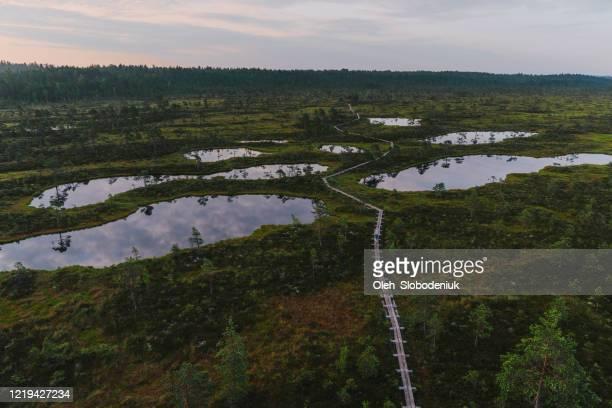 mujer caminando en un pantano en estonia - estonia fotografías e imágenes de stock