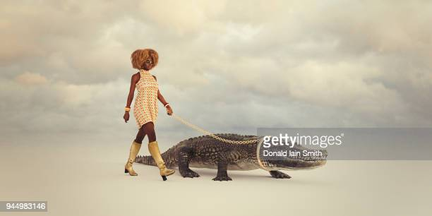 woman walking pet crocodile with gold chain and collar - bling bling stock pictures, royalty-free photos & images