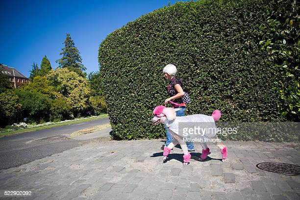 woman walking standard poodle - standard poodle stock photos and pictures