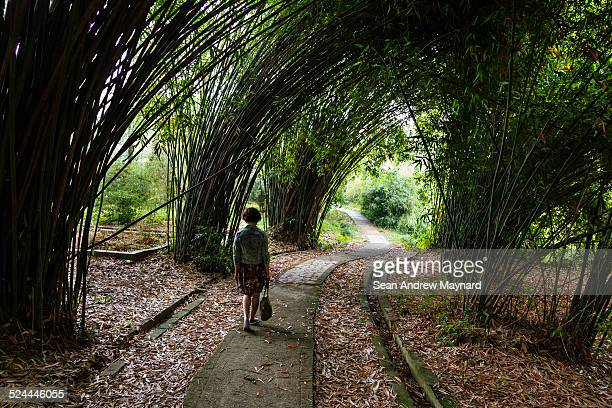 woman walking  through bamboo grove - wuhan city stock photos and pictures