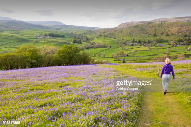 a woman walking through bluebells growing on a hill in the yorkshire dales national park, uk. - bluebell stock pictures, royalty-free photos & images