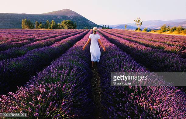 woman walking through lavender field (lavendula sp.), rear view - provence alpes cote d'azur stock pictures, royalty-free photos & images