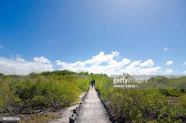 A woman walking through nature path