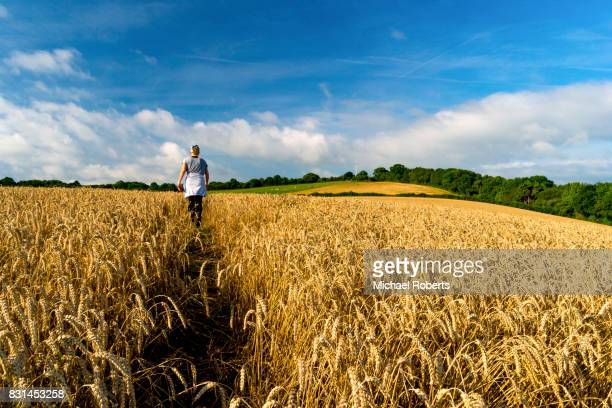 Woman walking through wheat fields in Penallt, Monmouthshire in the Wye Valley area of outstanding natural beauty (AONB)