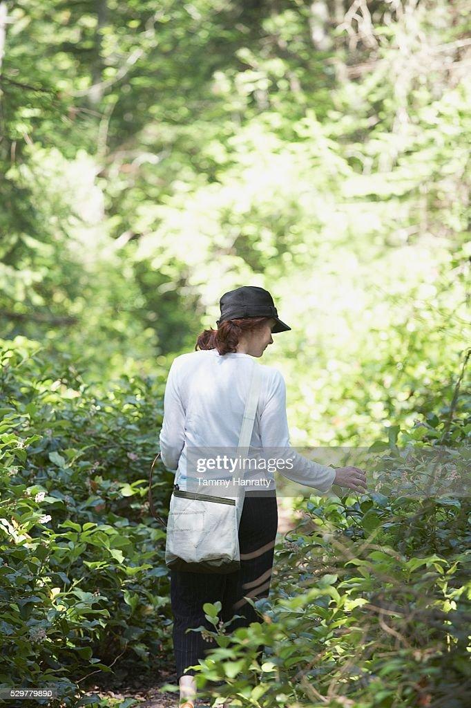 Woman walking through woods : Stock Photo