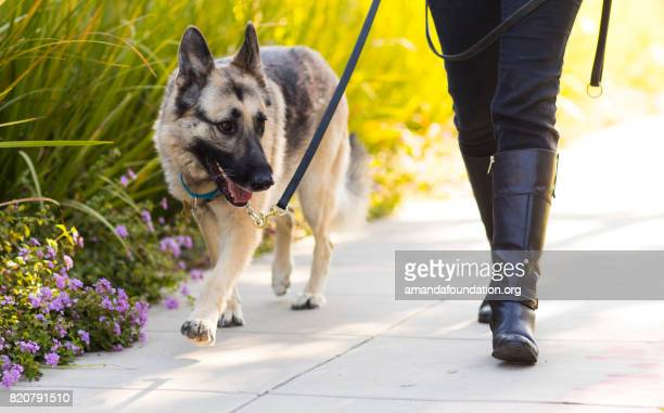 Woman Walking with a German Shepherd - The Amanda Collection