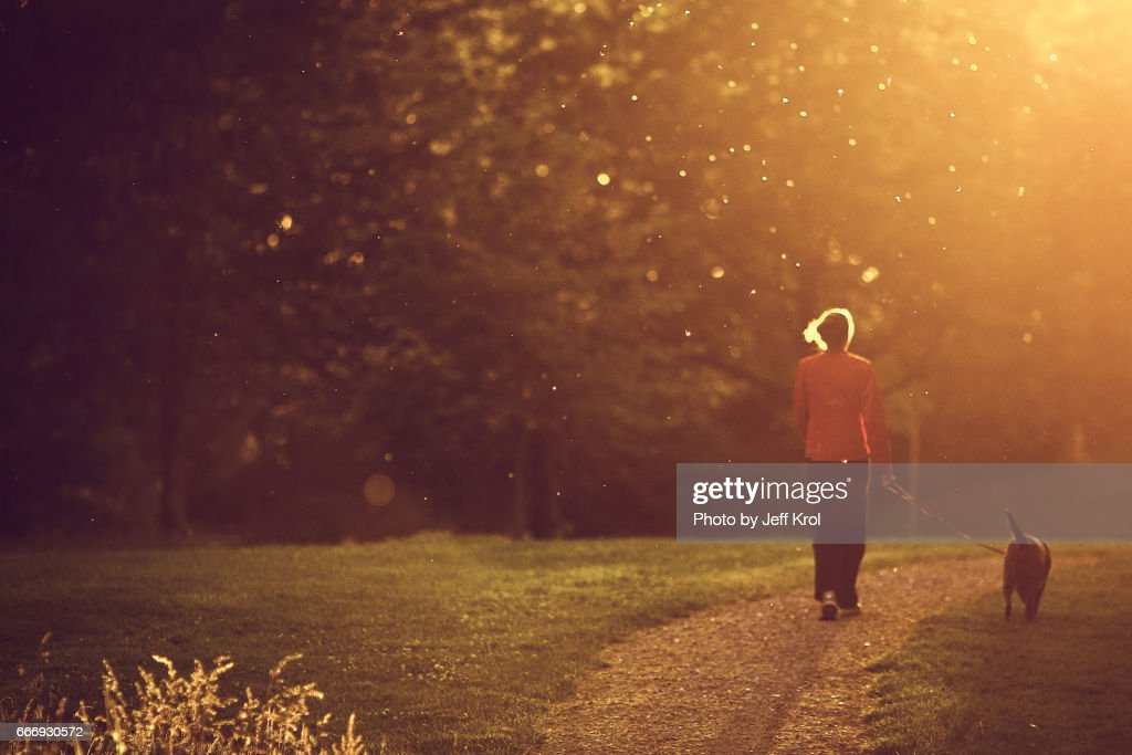 Woman walking with dog in park, warm sunset lighting up hair, mosquitoes, blurred dreamy view. : Stock Photo