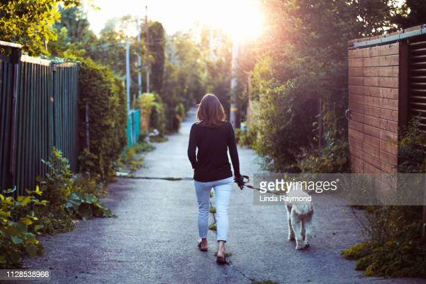a woman walking with her dog in an alley - walking stock pictures, royalty-free photos & images