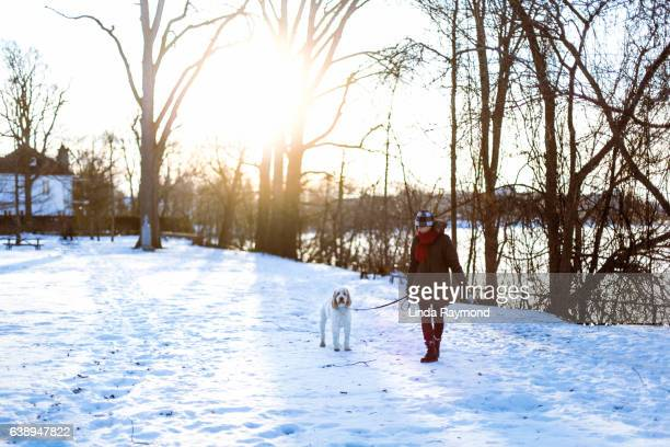 a woman walking with her dog on a leash during winter - goldendoodle stock-fotos und bilder
