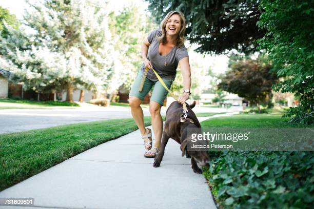 woman walking with labrador retriever - americas next top dog stock pictures, royalty-free photos & images