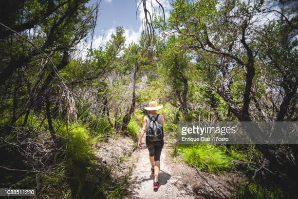 A woman walks amongst the Tea Trees, Binna Burra