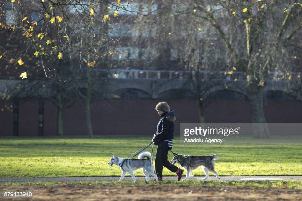 A woman walks around with dogs at Hyde Park during the last days of autumn on October 26 2017 in London England